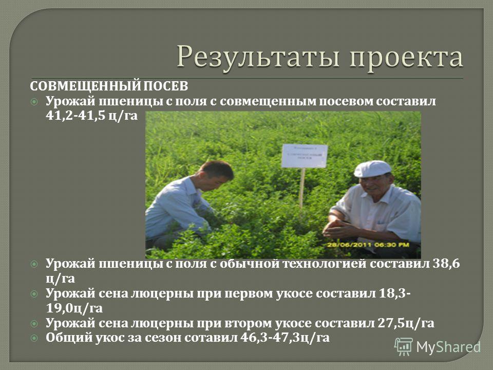 СОВМЕЩЕННЫЙ ПОСЕВ Урожай пшеницы с поля с совмещенным посевом составил 41,2-41,5 ц / га Урожай пшеницы с поля с обычной технологией составил 38,6 ц / га Урожай сена люцерны при первом укосе составил 18,3- 19,0 ц / га Урожай сена люцерны при втором ук