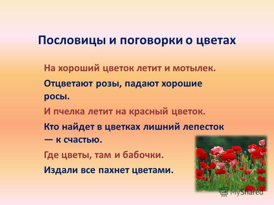 Пословицы и поговорки о цветах На хороший цветок летит и мотылек. Отцветают розы, падают хорошие росы. И пчелка летит на красный цветок. Кто найдет в цветках лишний лепесток к счастью. Где цветы, там и бабочки. Издали все пахнет цветами.