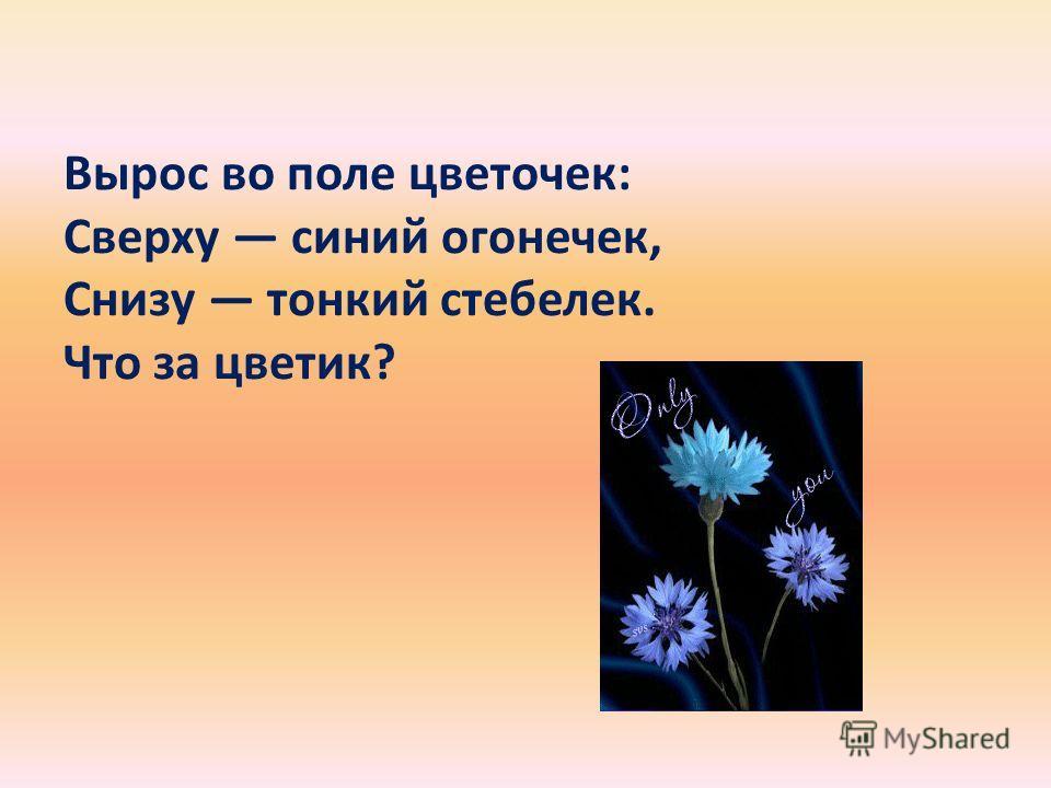 Вырос во поле цветочек: Сверху синий огонечек, Снизу тонкий стебелек. Что за цветик?