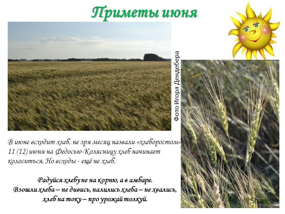Приметы июня Фото Игоря Дендебера В июне всходит хлеб, не зря месяц назвали «хлеборостом». 11 (12) июня на Федосью-Колясницу хлеб начинает колоситься. Но всходы - ещё не хлеб. Радуйся хлебу не на корню, а в амбаре. Взошли хлеба – не дивись, налились
