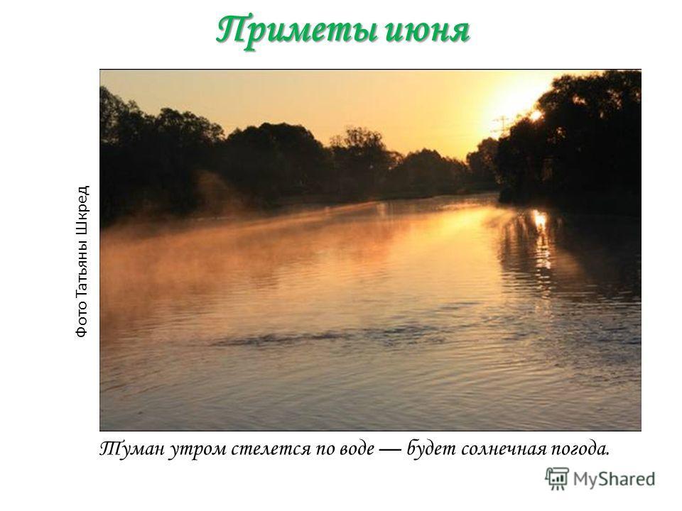 Приметы июня Туман утром стелется по воде будет солнечная погода. Фото Татьяны Шкред