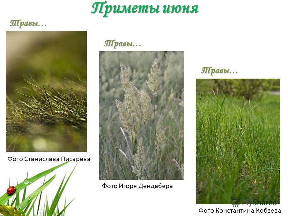 Приметы июня Фото Станислава Писарева Фото Игоря Дендебера Фото Константина Кобзева Травы… Травы… Травы…