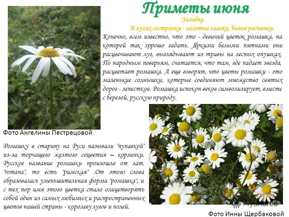 Приметы июня Приметы июня Фото Инны Щербаковой Фото Ангелины Пестрецовой Ромашку в старину на Руси называли