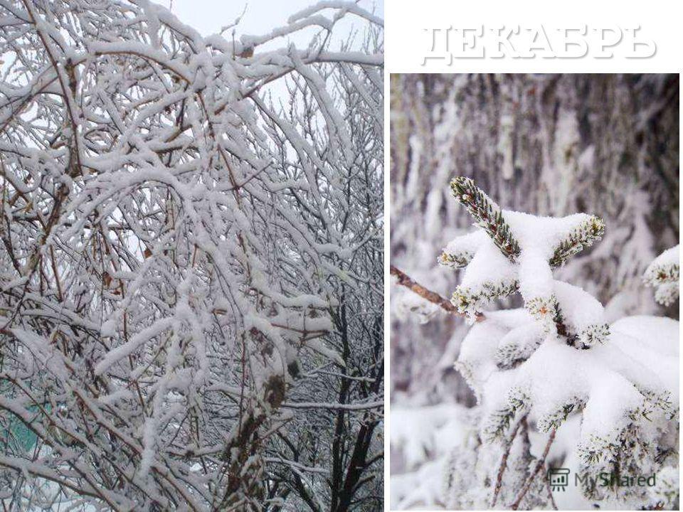 ЗИМА Вот наступило самое холодное время года – зима. Три зимних месяца -