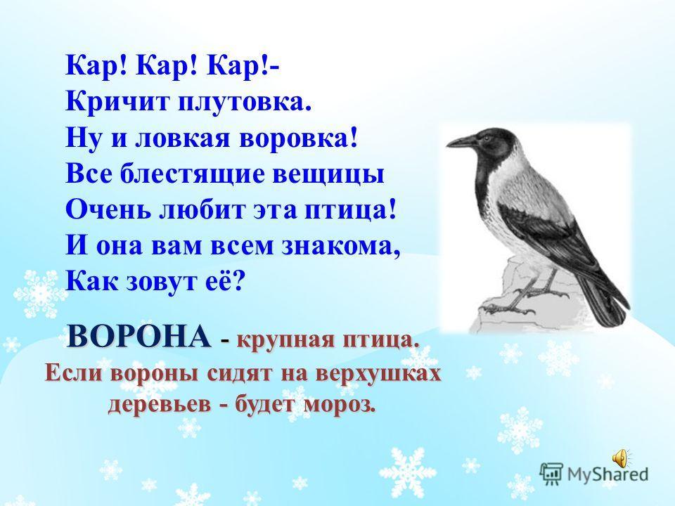 СИНИЦА - ловкая птичка, уничтожает вредителей не только летом, но и зимой.