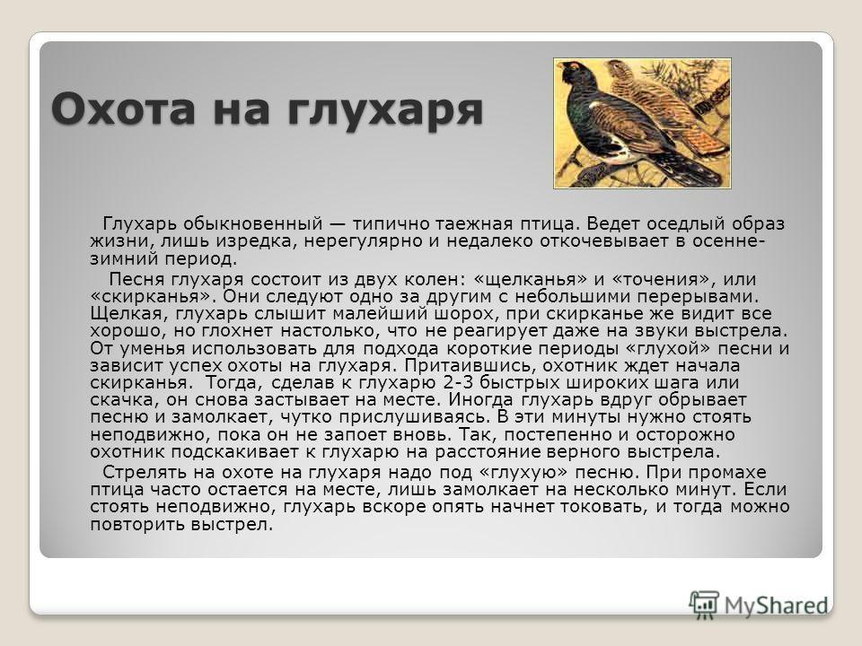 Охота на глухаря Глухарь обыкновенный типично таежная птица. Ведет оседлый образ жизни, лишь изредка, нерегулярно и недалеко откочевывает в осенне- зимний период. Песня глухаря состоит из двух колен: «щелканья» и «точения», или «скирканья». Они следу