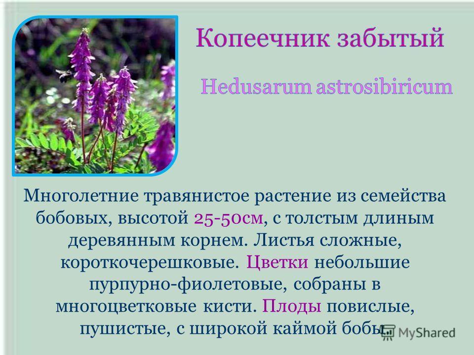 Многолетние травянистое растение из семейства бобовых, высотой 25-50см, с толстым длиным деревянным корнем. Листья сложные, короткочерешковые. Цветки небольшие пурпурно-фиолетовые, собраны в многоцветковые кисти. Плоды повислые, пушистые, с широкой к