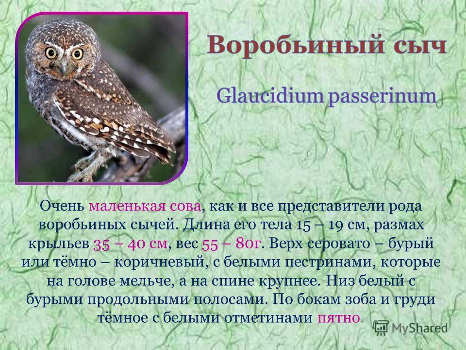 Очень маленькая сова, как и все представители рода воробьиных сычей. Длина его тела 15 – 19 см, размах крыльев 35 – 40 см, вес 55 – 80г. Верх серовато – бурый или тёмно – коричневый, с белыми пестринами, которые на голове мельче, а на спине крупнее.