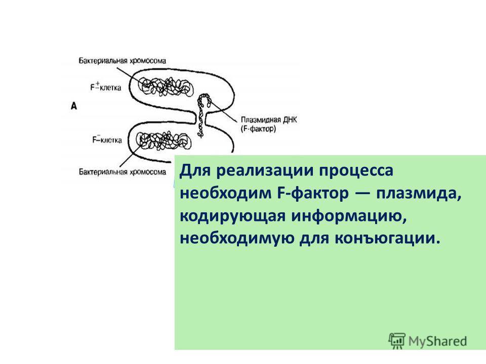Для реализации процесса необходим F-фактор плазмида, кодирующая информацию, необходимую для конъюгации.