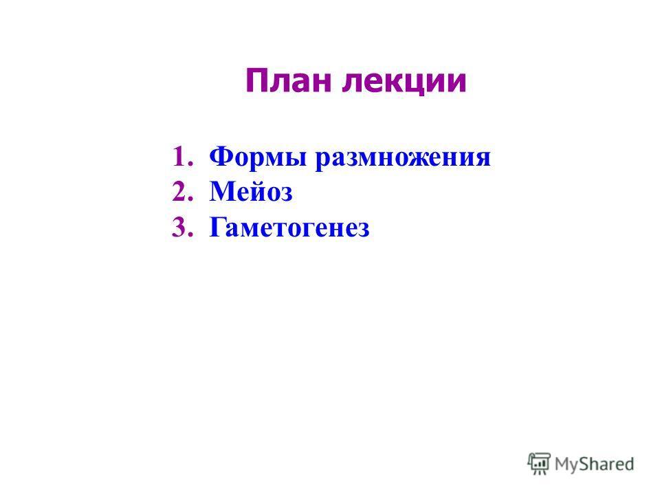 План лекции 1.Формы размножения 2.Мейоз 3.Гаметогенез