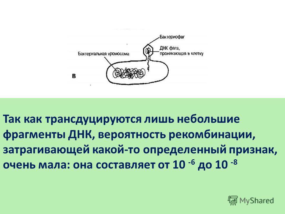 Так как трансдуцируются лишь небольшие фрагменты ДНК, вероятность рекомбинации, затрагивающей какой-то определенный признак, очень мала: она составляет от 10 -6 до 10 -8