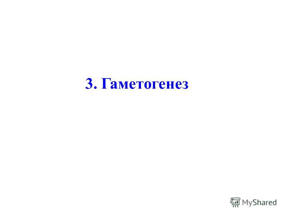 3. Гаметогенез
