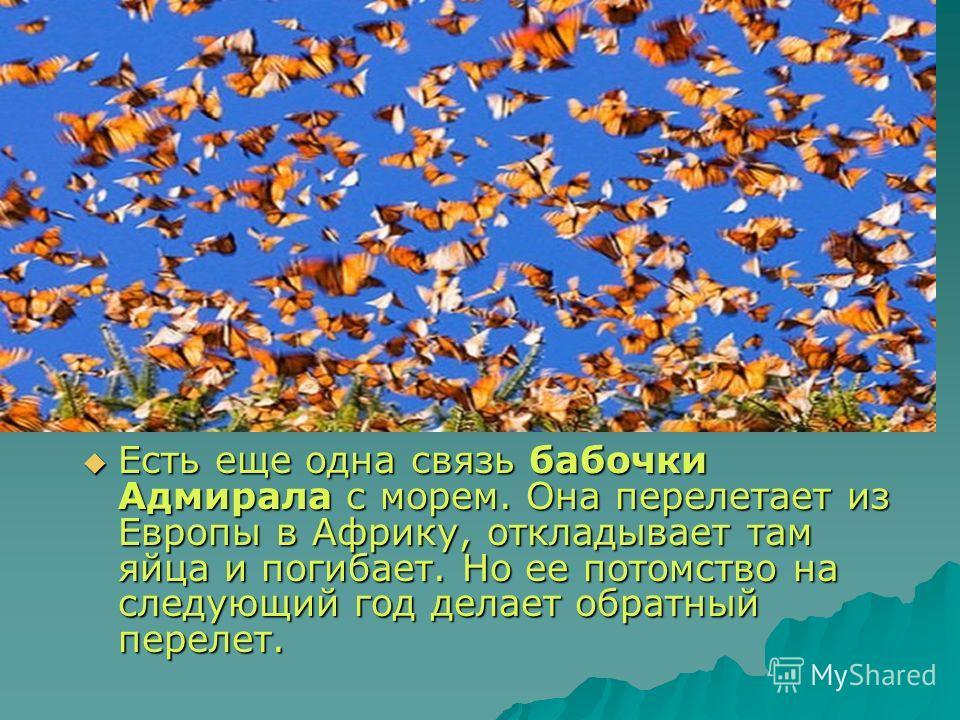 Есть еще одна связь бабочки Адмирала с морем. Она перелетает из Европы в Африку, откладывает там яйца и погибает. Но ее потомство на следующий год делает обратный перелет. Есть еще одна связь бабочки Адмирала с морем. Она перелетает из Европы в Африк