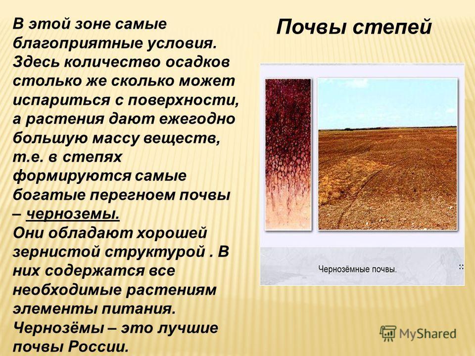 Почвы степей В этой зоне самые благоприятные условия. Здесь количество осадков столько же сколько может испариться с поверхности, а растения дают ежегодно большую массу веществ, т.е. в степях формируются самые богатые перегноем почвы – черноземы. Они