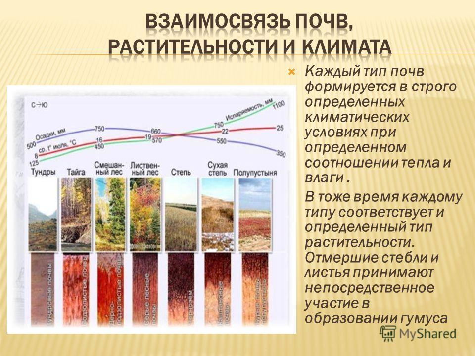 Каждый тип почв формируется в строго определенных климатических условиях при определенном соотношении тепла и влаги. В тоже время каждому типу соответствует и определенный тип растительности. Отмершие стебли и листья принимают непосредственное участи