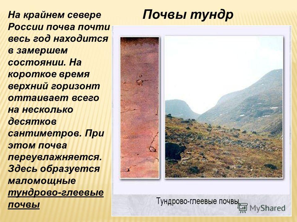 На крайнем севере России почва почти весь год находится в замершем состоянии. На короткое время верхний горизонт оттаивает всего на несколько десятков сантиметров. При этом почва переувлажняется. Здесь образуется маломощные тундрово-глеевые почвы Поч