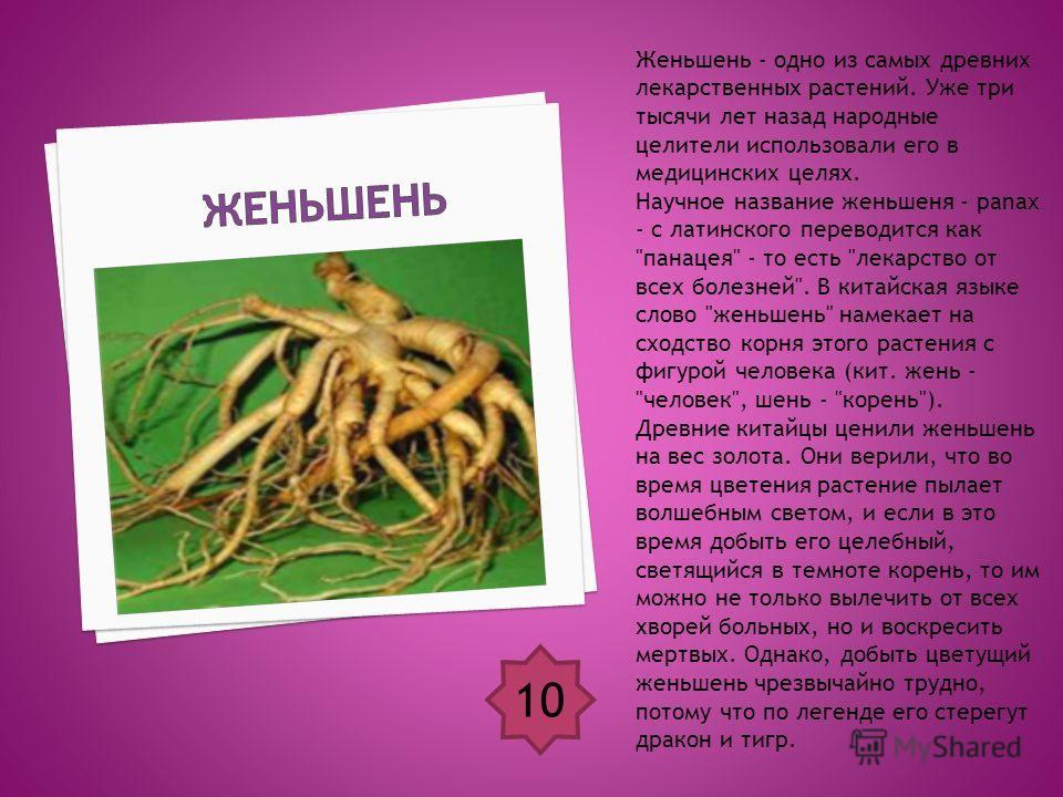 Женьшень - одно из самых древних лекарственных растений. Уже три тысячи лет назад народные целители использовали его в медицинских целях. Научное название женьшеня - panax - с латинского переводится как