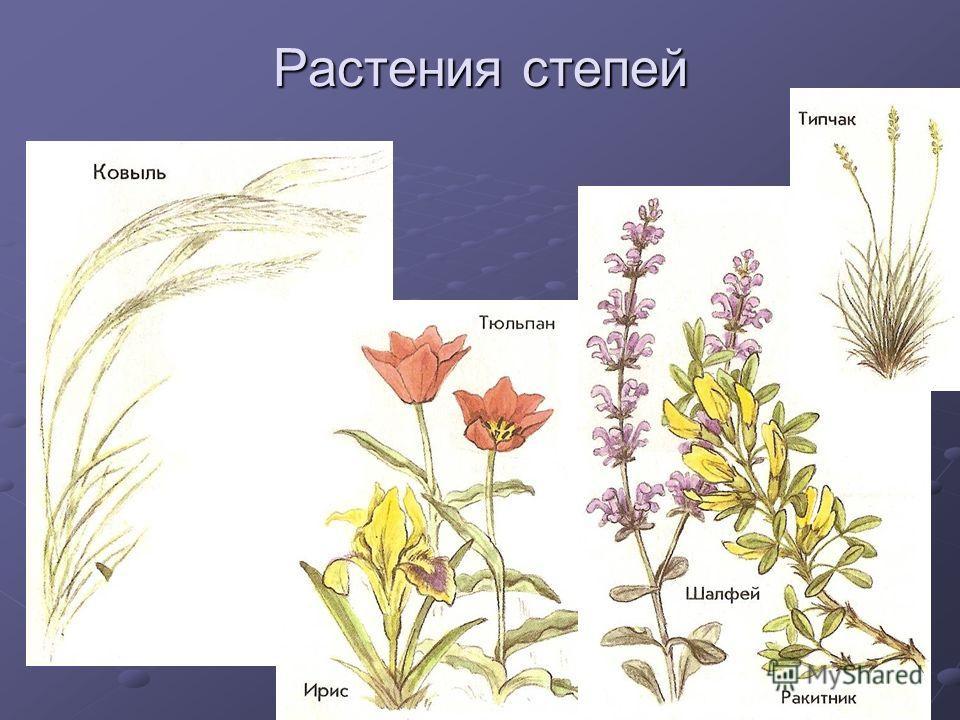 Растения степей