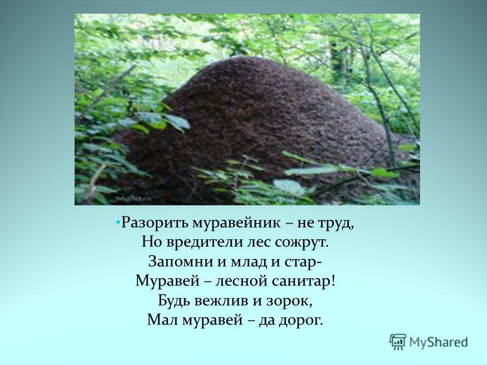 Разорить муравейник – не труд, Но вредители лес сожрут. Запомни и млад и стар- Муравей – лесной санитар! Будь вежлив и зорок, Мал муравей – да дорог.