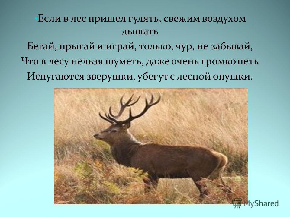 Если в лес пришел гулять, свежим воздухом дышать Бегай, прыгай и играй, только, чур, не забывай, Что в лесу нельзя шуметь, даже очень громко петь Испугаются зверушки, убегут с лесной опушки.