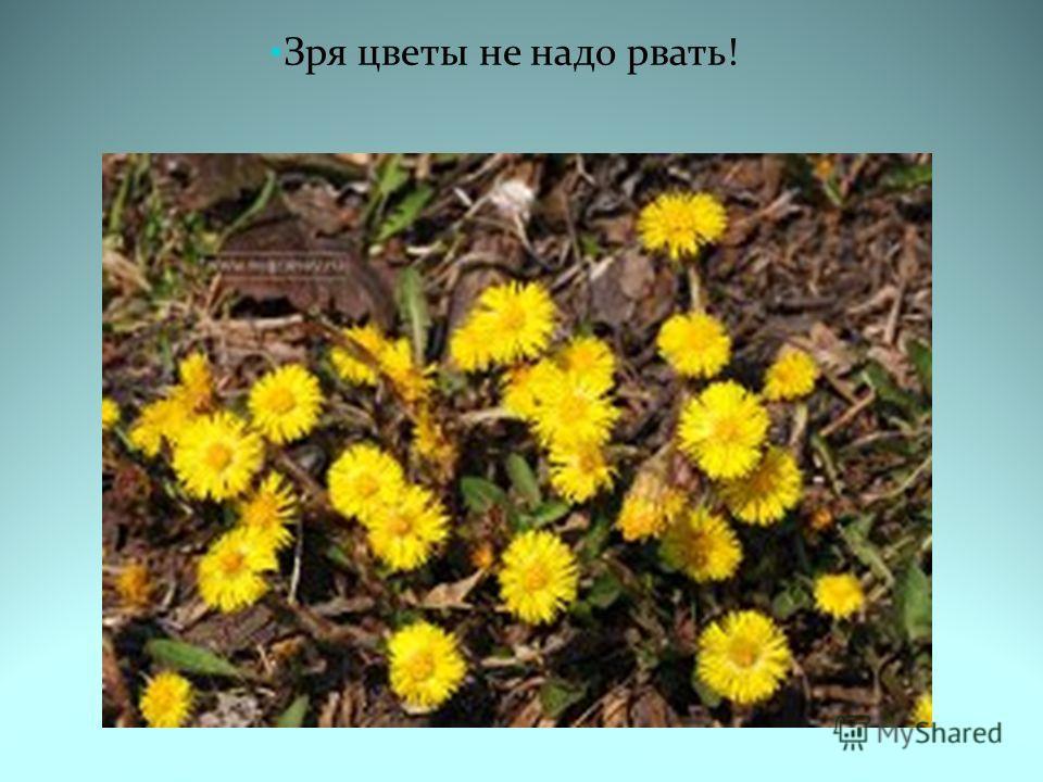 Зря цветы не надо рвать!
