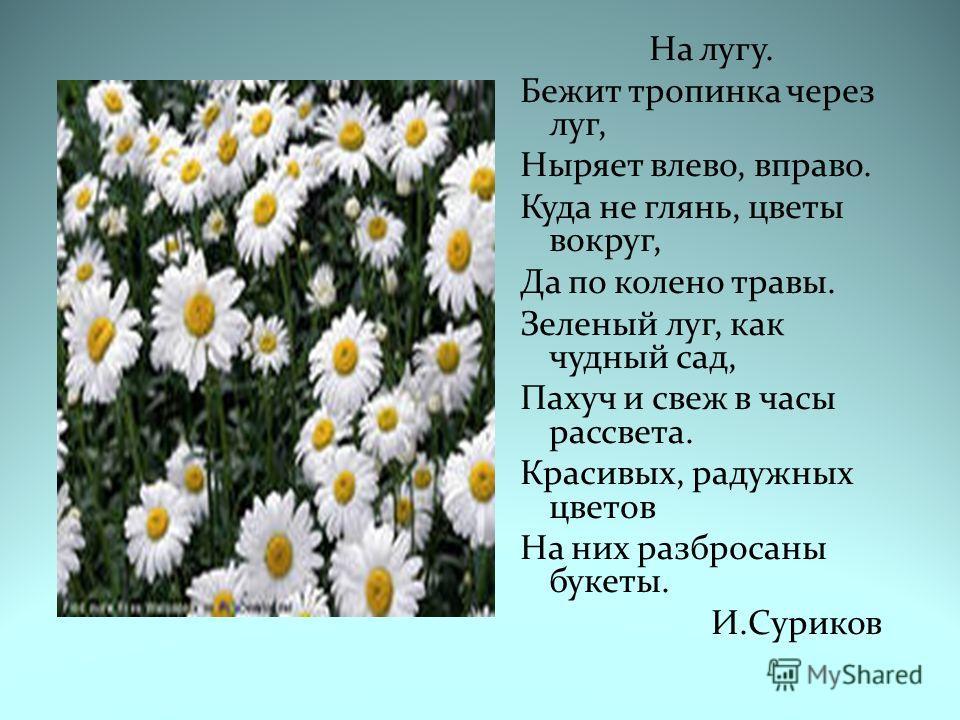 На лугу. Бежит тропинка через луг, Ныряет влево, вправо. Куда не глянь, цветы вокруг, Да по колено травы. Зеленый луг, как чудный сад, Пахуч и свеж в часы рассвета. Красивых, радужных цветов На них разбросаны букеты. И.Суриков