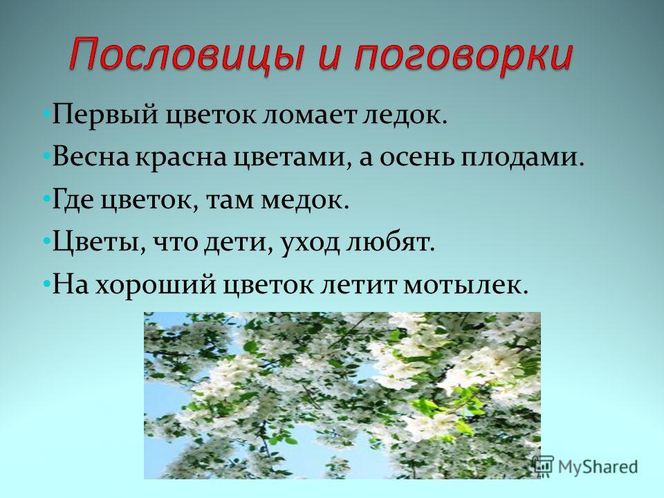 Первый цветок ломает ледок. Весна красна цветами, а осень плодами. Где цветок, там медок. Цветы, что дети, уход любят. На хороший цветок летит мотылек.