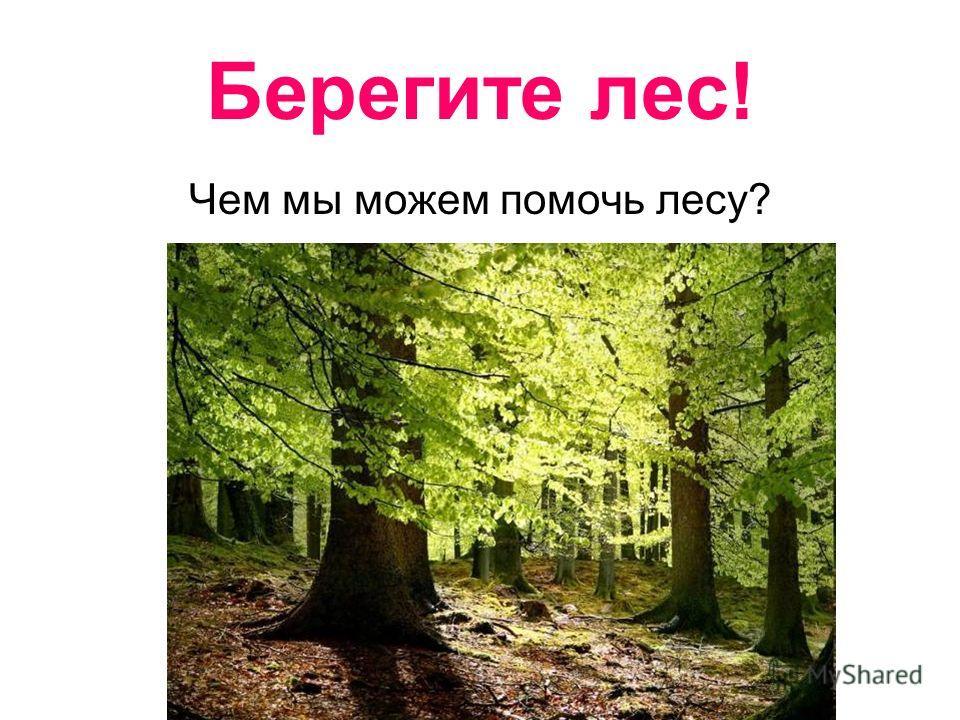 Берегите лес! Чем мы можем помочь лесу?