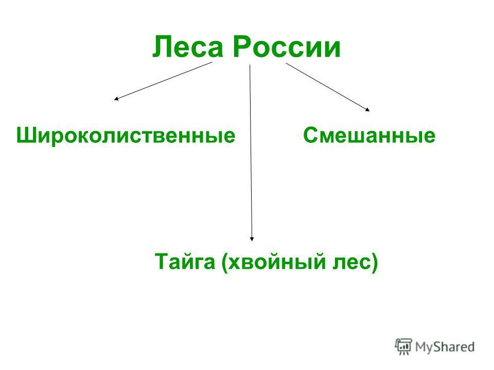 Леса России Широколиственные Смешанные Тайга (хвойный лес)