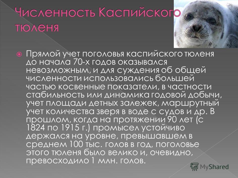Прямой учет поголовья каспийского тюленя до начала 70-х годов оказывался невозможным, и для суждения об общей численности использовались большей частью косвенные показатели, в частности стабильность или динамика годовой добычи, учет площади детных за