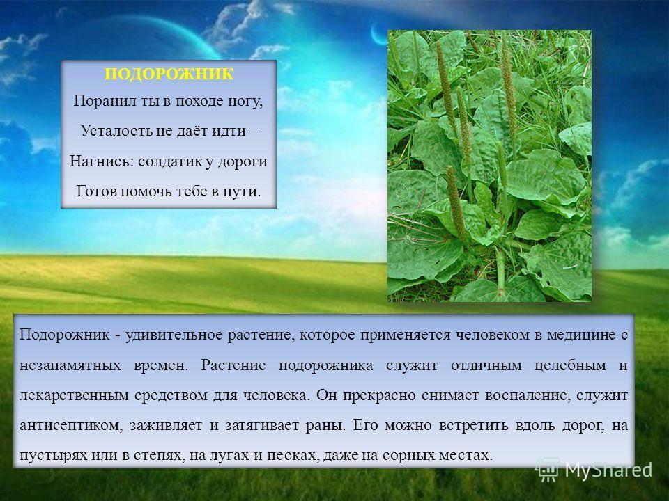 Подорожник - удивительное растение, которое применяется человеком в медицине с незапамятных времен. Растение подорожника служит отличным целебным и лекарственным средством для человека. Он прекрасно снимает воспаление, служит антисептиком, заживляет