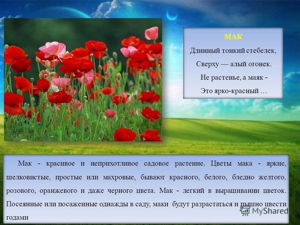 МАК Длинный тонкий стебелек, Сверху алый огонек. Не растенье, а маяк - Это ярко-красный … Мак - красивое и неприхотливое садовое растение. Цветы мака - яркие, шелковистые, простые или махровые, бывают красного, белого, бледно желтого, розового, оранж