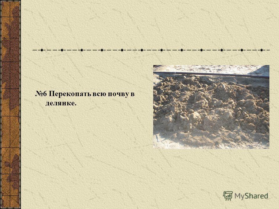 6 Перекопать всю почву в делянке.