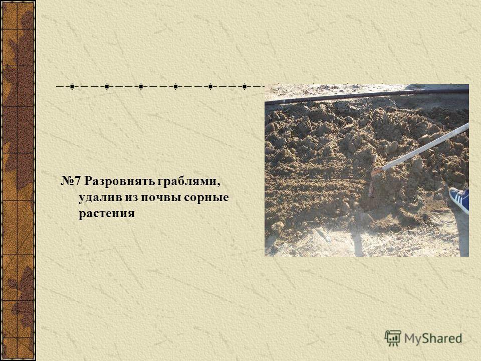 7 Разровнять граблями, удалив из почвы сорные растения