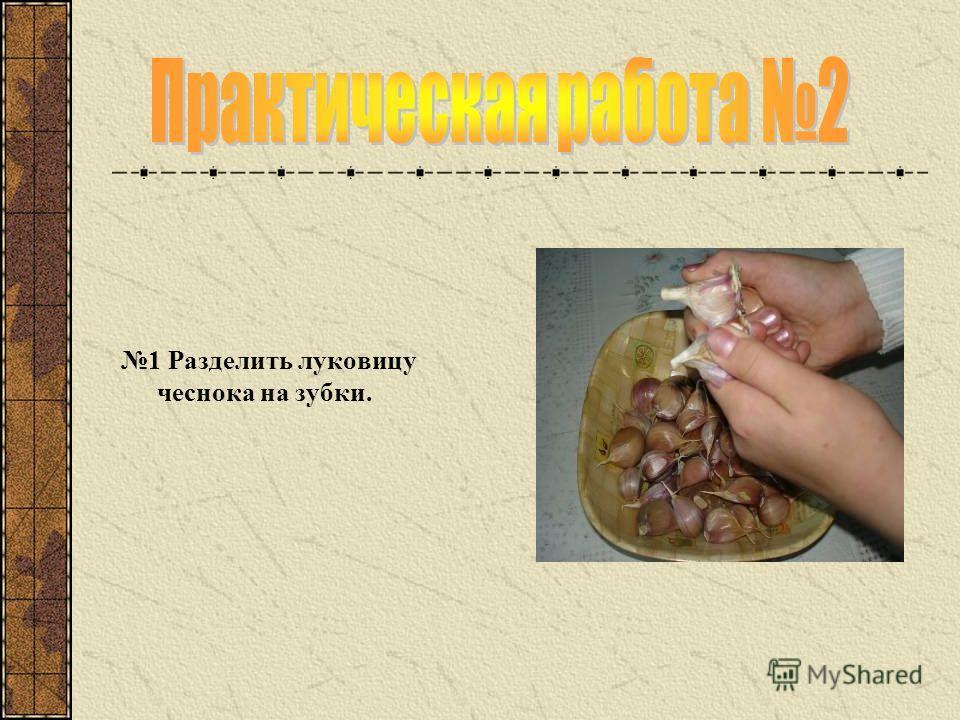1 Разделить луковицу чеснока на зубки.