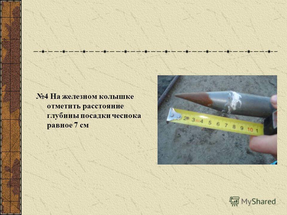 4 На железном колышке отметить расстояние глубины посадки чеснока равное 7 см
