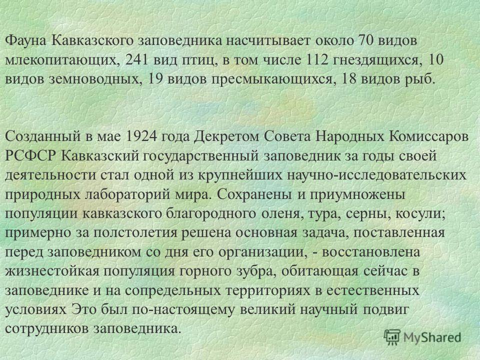 Фауна Кавказского заповедника насчитывает около 70 видов млекопитающих, 241 вид птиц, в том числе 112 гнездящихся, 10 видов земноводных, 19 видов пресмыкающихся, 18 видов рыб. Созданный в мае 1924 года Декретом Совета Народных Комиссаров РСФСР Кавказ