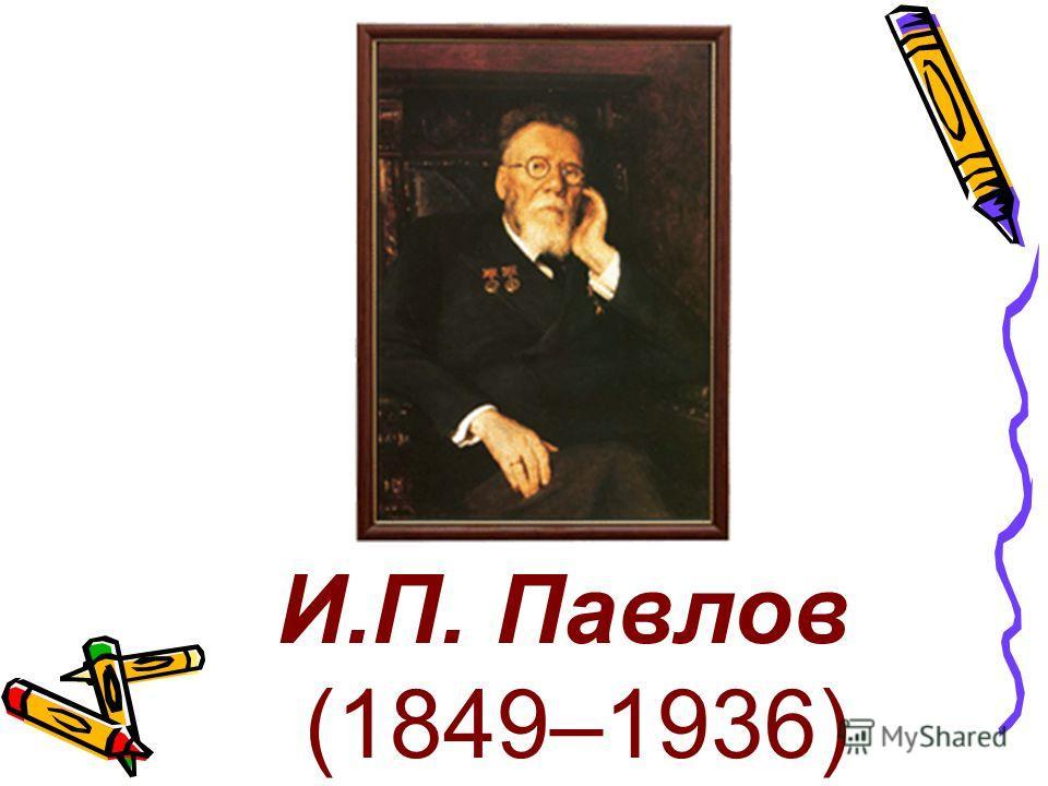 И.П. Павлов (1849–1936)