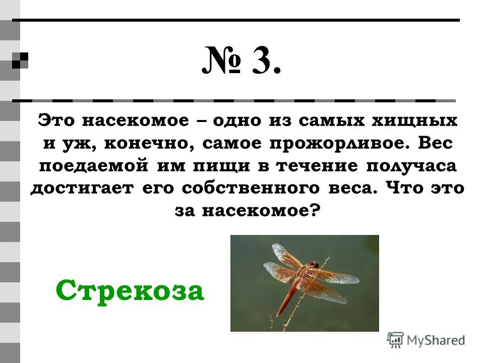 3. Это насекомое – одно из самых хищных и уж, конечно, самое прожорливое. Вес поедаемой им пищи в течение получаса достигает его собственного веса. Что это за насекомое? Стрекоза