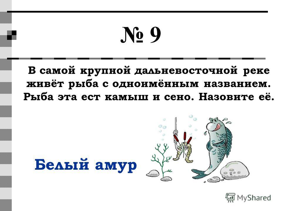 9 В самой крупной дальневосточной реке живёт рыба с одноимённым названием. Рыба эта ест камыш и сено. Назовите её. Белый амур