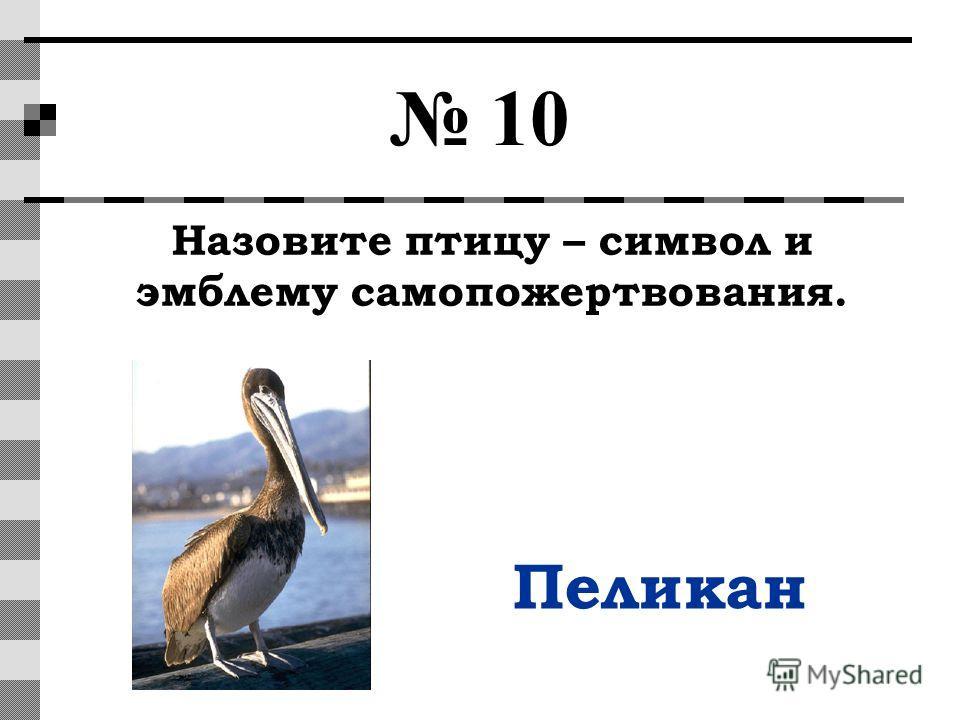 10 Назовите птицу – символ и эмблему самопожертвования. Пеликан