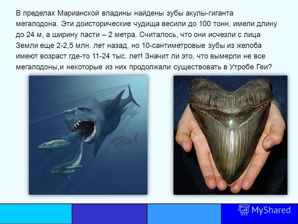В пределах Марианской впадины найдены зубы акулы-гиганта мегалодона. Эти доисторические чудища весили до 100 тонн, имели длину до 24 м, а ширину пасти – 2 метра. Считалось, что они исчезли с лица Земли еще 2-2,5 млн. лет назад, но 10-сантиметровые зу