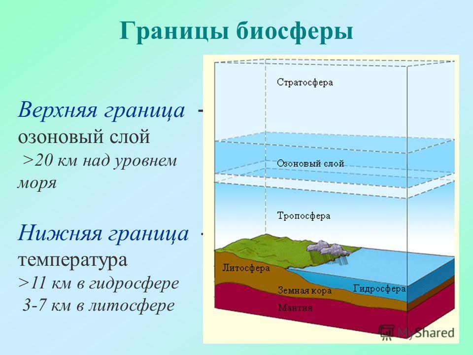 Границы биосферы Верхняя граница - озоновый слой >20 км над уровнем моря Нижняя граница - температура >11 км в гидросфере 3-7 км в литосфере
