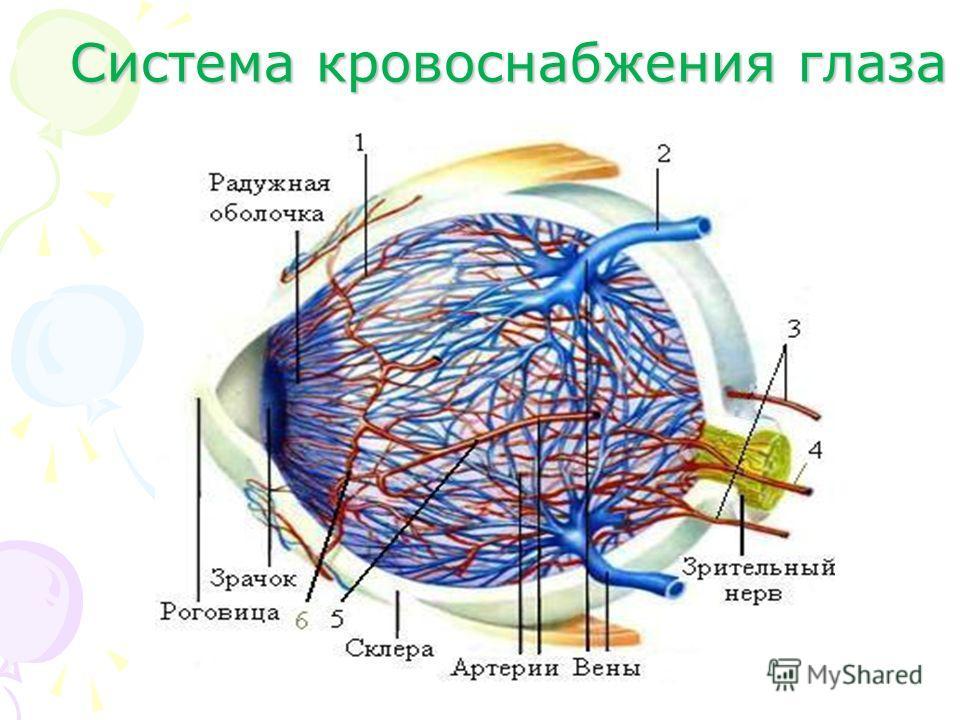 Система кровоснабжения глаза