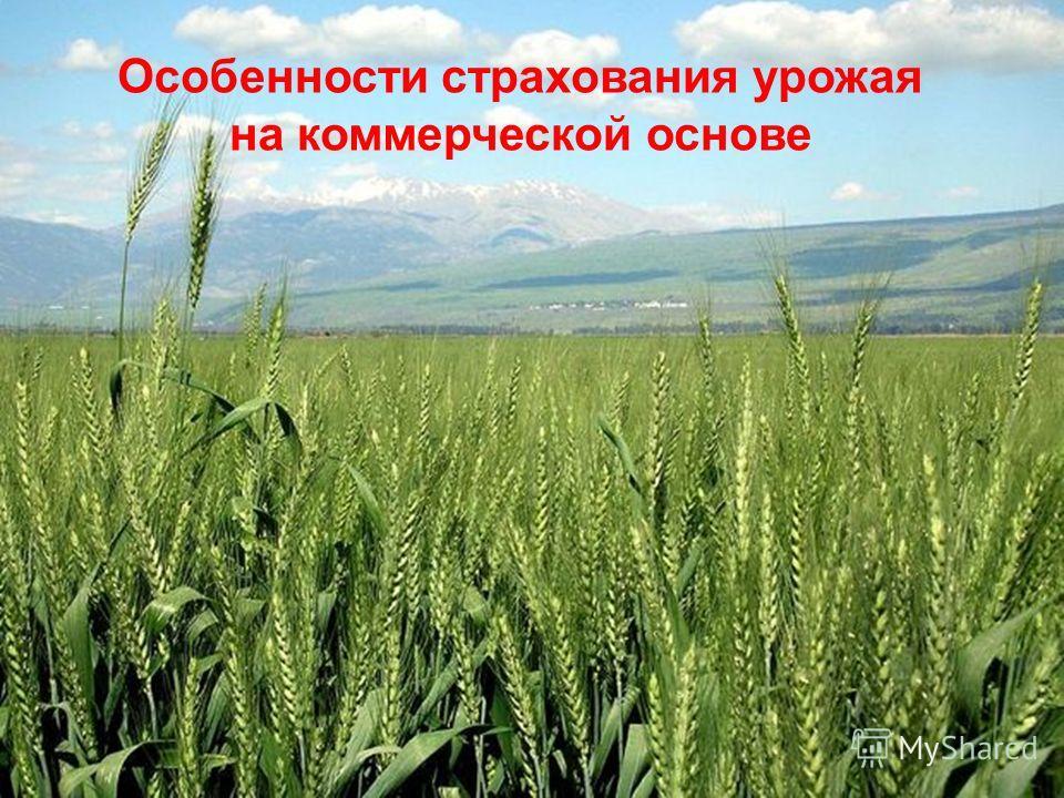 Особенности страхования урожая на коммерческой основе