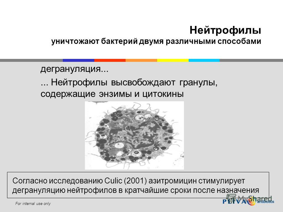 For internal use only Нейтрофилы уничтожают бактерий двумя различными способами дегрануляция...... Нейтрофилы высвобождают гранулы, содержащие энзимы и цитокины Согласно исследованию Culic (2001) азитромицин стимулирует дегрануляцию нейтрофилов в кра