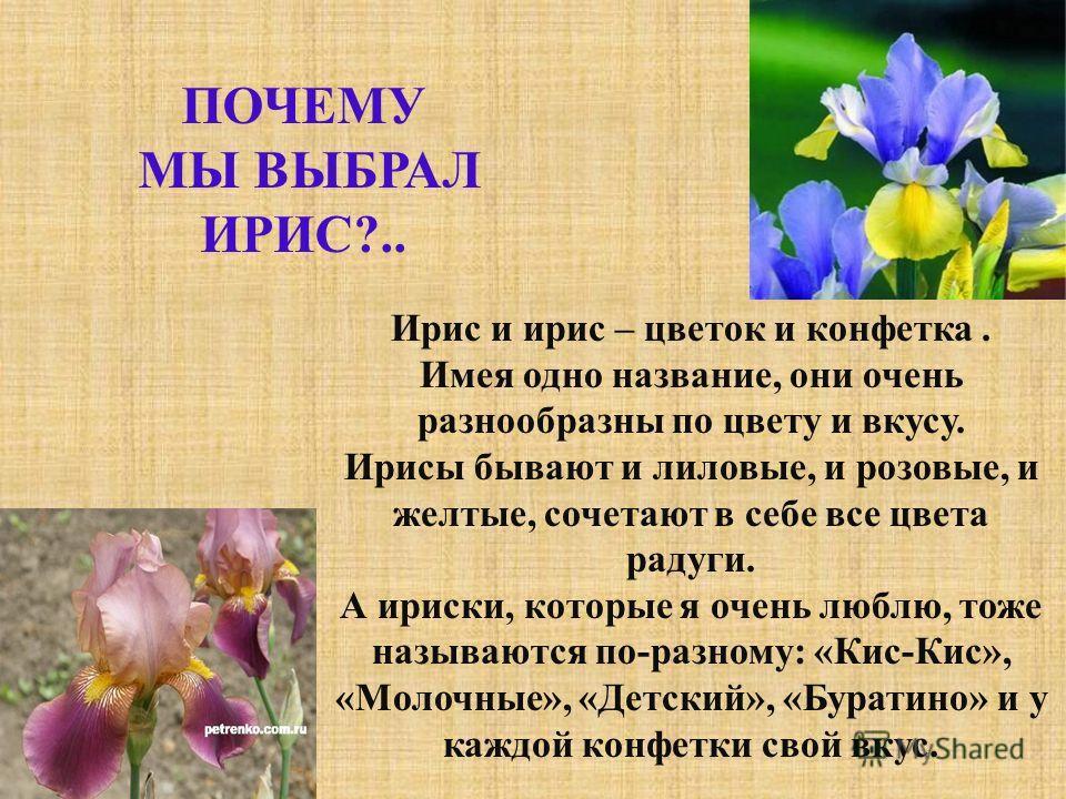 Ирис и ирис – цветок и конфетка. Имея одно название, они очень разнообразны по цвету и вкусу. Ирисы бывают и лиловые, и розовые, и желтые, сочетают в себе все цвета радуги. А ириски, которые я очень люблю, тоже называются по - разному : « Кис - Кис »