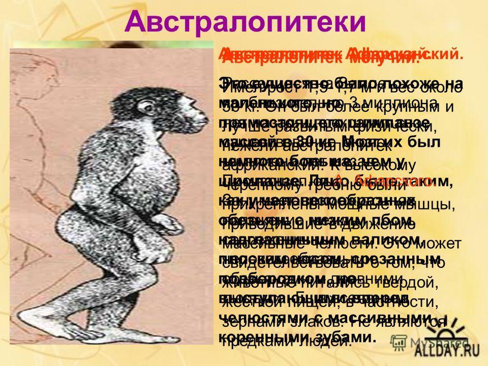 Австралопитеки Австралопитек Афарский. Это существо было похоже на маленького, но прямостоящего шимпанзе массой в 30 кг. Мозг их был немного больше, чем у шимпанзе. Лицо было таким, как у человекообразных обезьян: с низким лбом, надглазничным валиком