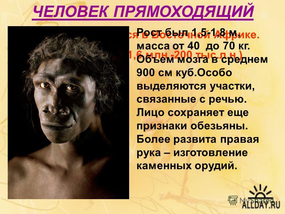 ЧЕЛОВЕК ПРЯМОХОДЯЩИЙ Впервые появился в Восточной Африке. Существовал 1,6 млн -200 тыс.л.н.) Рост был 1,5-1,8 м, масса от 40 до 70 кг. Объем мозга в среднем 900 см куб.Особо выделяются участки, связанные с речью. Лицо сохраняет еще признаки обезьяны.