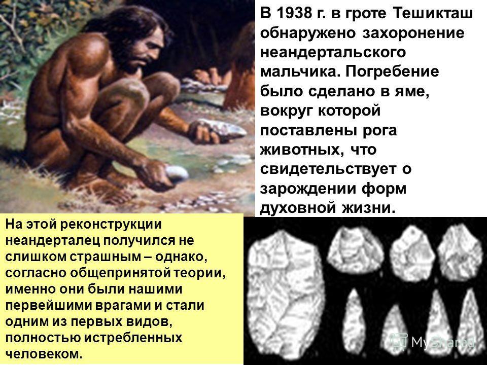 На этой реконструкции неандерталец получился не слишком страшным – однако, согласно общепринятой теории, именно они были нашими первейшими врагами и стали одним из первых видов, полностью истребленных человеком. В 1938 г. в гроте Тешикташ обнаружено
